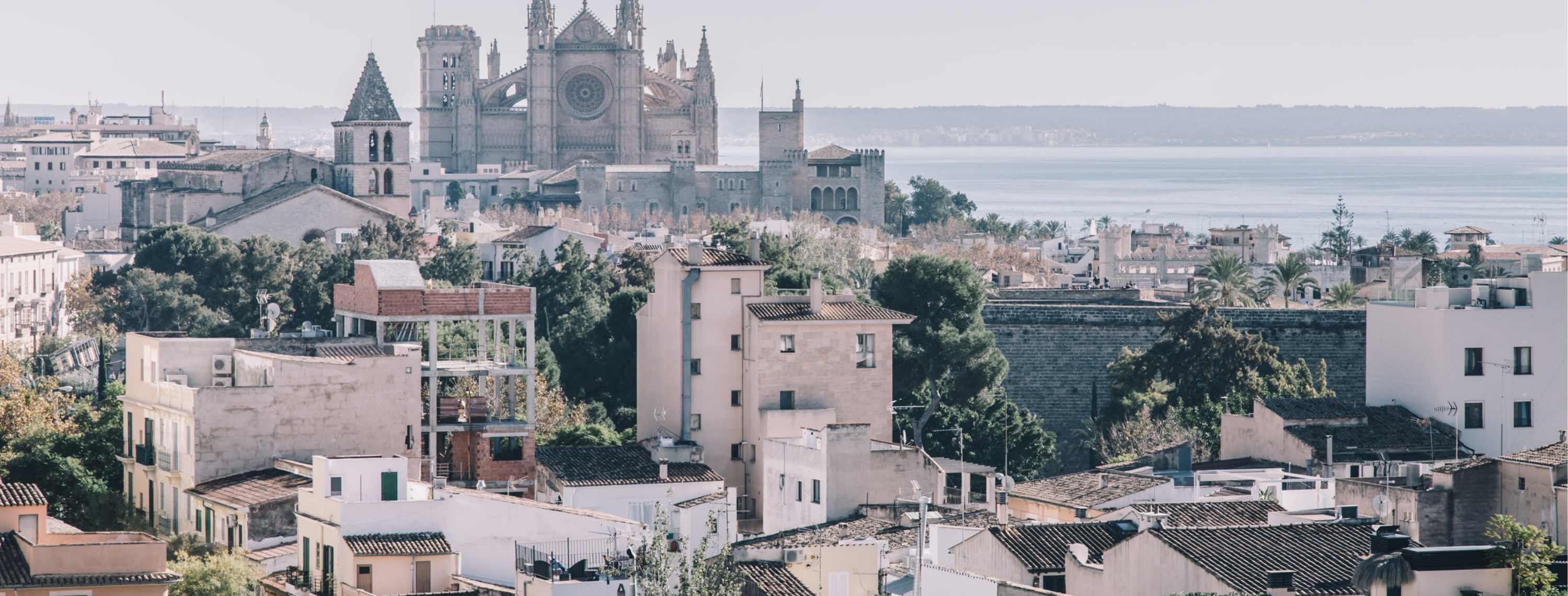 Fantastic Frank buying guide palma de mallorca